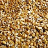 Un metodo 'made in Italy' per spazzare via la tossina che si nasconde negli alimenti