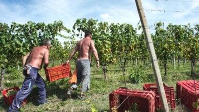 Il Sud riparte dall'agricoltura