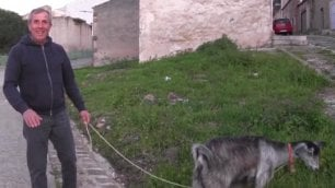 Una capra al posto del giardiniere   E il comune risparmia 5mila euro