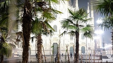 Milano, dopo le palme arrivano i banani: laiuola di piazza Duomo prende forma