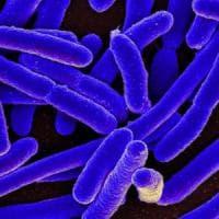 In primavera arriva il piano nazionale contro le antibiotico resistenze