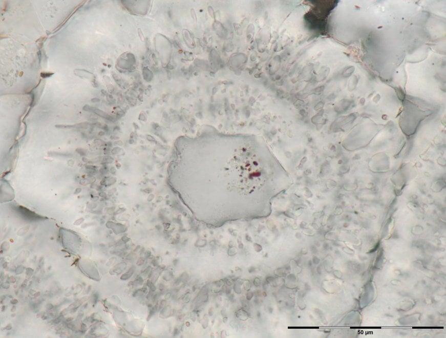 I fossili delle forme di vita più antiche del nostro pianeta