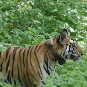 Il massacro dei cyber-bracconieri: a caccia di animali in estinzione col Gps