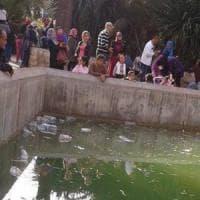 Lapidato e ucciso coccodrillo nello zoo di Tunisi. La protesta sui social: ''Chiudetelo''
