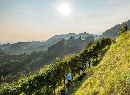 Prosecco, la viticoltura sostenibile e ipertecnologica della famiglia Bortolomiol