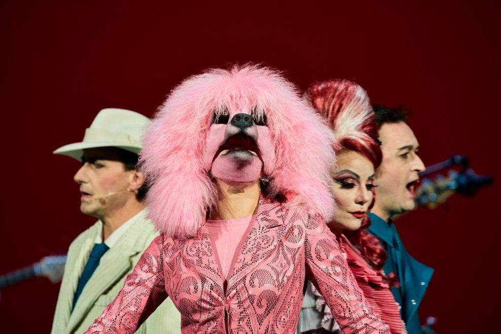 Cane, amore e gelosia: il dramma audace di 'Madame Pink'