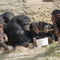 Intelligenza animale: le specie con il QI più alto
