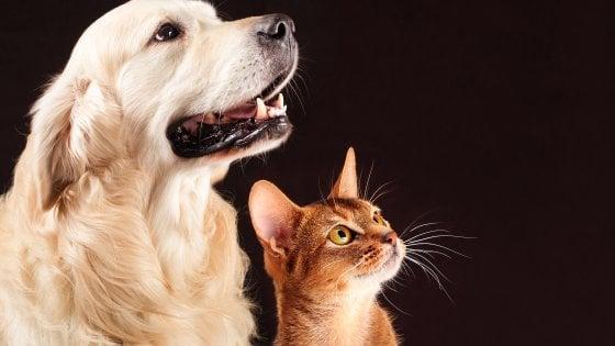Sorpresa Il Gatto Non è Meno Intelligente Del Cane Repubblicait