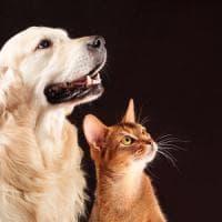 Sorpresa, il gatto non è meno intelligente del cane