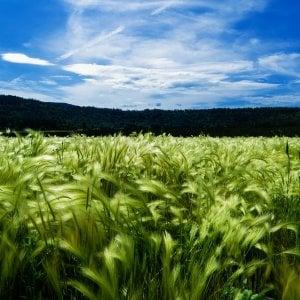 Agricoltura delle meraviglie: luci ed ombre del cibo bio