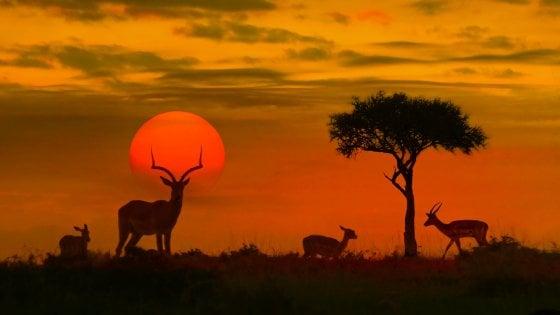 Il Sudafrica della natura vista da vicino