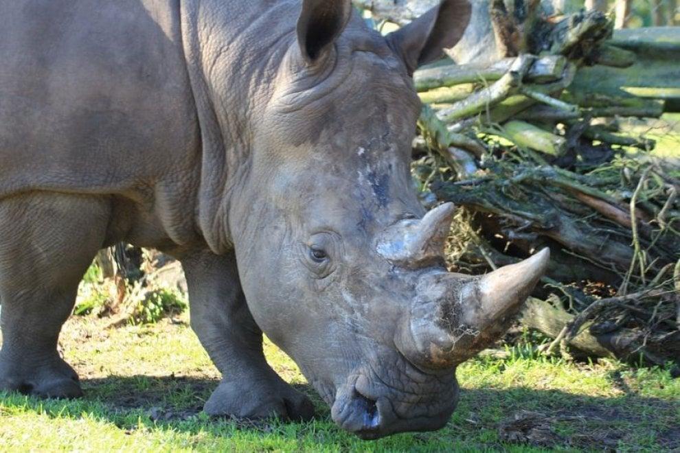 Animali uccisi negli zoo