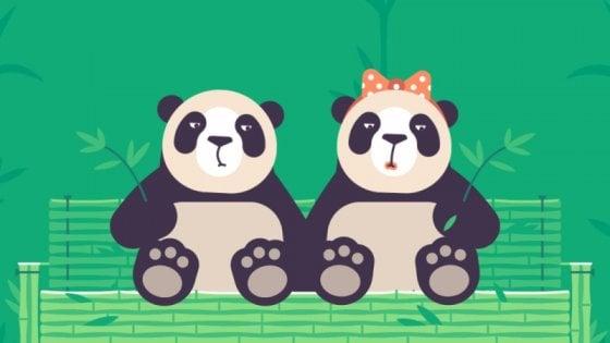 Pornhub pro-animali: 100 dollari alle associazioni per ogni video girato in costume da panda