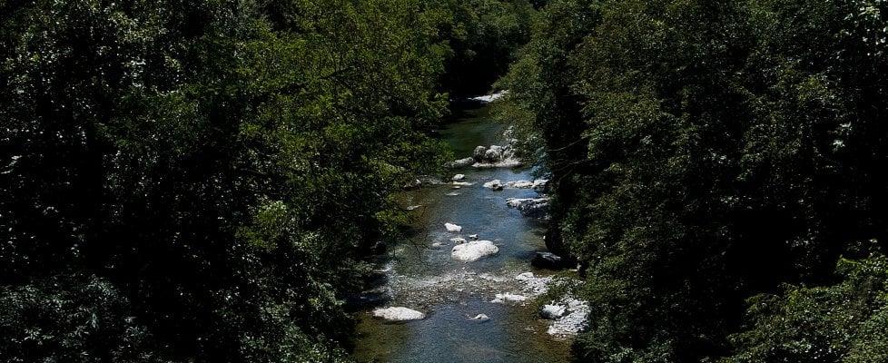 Faggi, primule e partigiani: tutti i benefici della terapia della foresta
