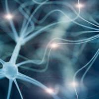 Ecco come cambia il cervello quando impariamo