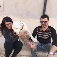 Sherman, il cane conteso tra Italia e Germania