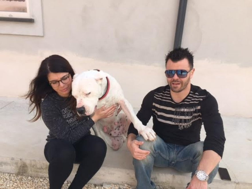 Sherman, il cane conteso tra Italia e Germania