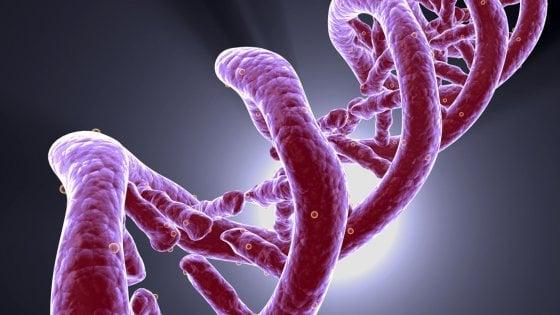 Pillole della longevità, due nuovi test per mantenere le cellule giovani