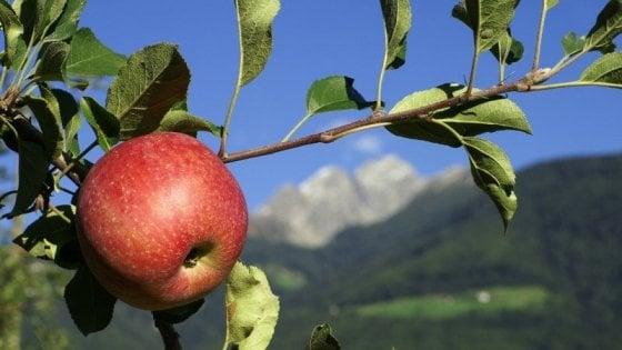 Nella miniera hi-tech dove si conservano le mele delle Dolomiti