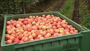 La miniera hi-tech conserva le mele delle Dolomiti
