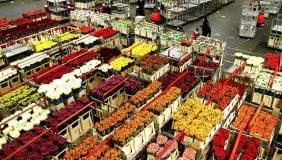 Coca e tulipani, così la mafia usa i fiori per il narcotraffico