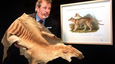 ''Australia, avvistata la tigre della Tasmania''