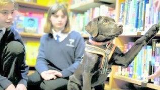 Il cane sale in cattedraa scuola tutti più concentrati
