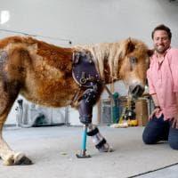 Usa, il vero dottor Dolittle che aiuta gli animali a camminare di nuovo
