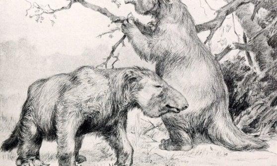 "Brasile: scoperte le enormi ""paleo-tane"" degli antichi bradipi giganti"