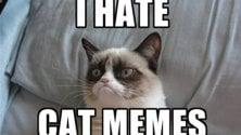 Meme Trends,  l'assurdo piace: c'è un algoritmo per trovarli   Le immagini