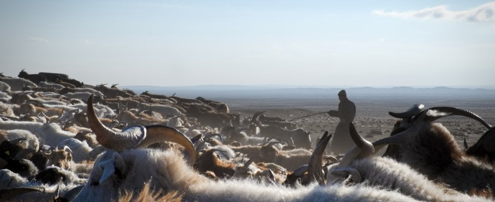 """Mongolia, la primavera dei pastori nomadi. """"E' la resilienza ai cambiamenti climatici"""""""