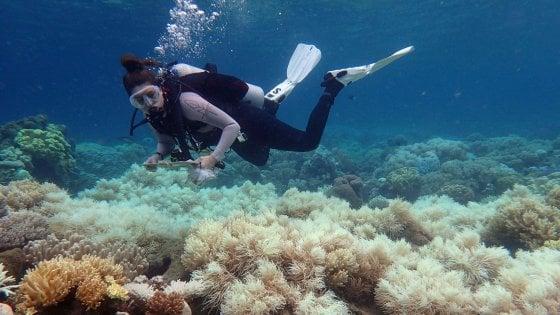 Australia: due terzi della barriera corallina colpiti da sbiancamento