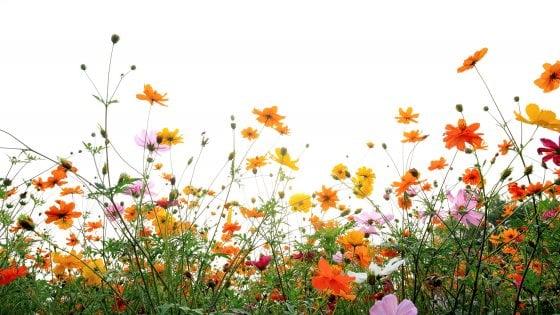 Sorpresa: in giardino tira una brutta aria per l'ambiente