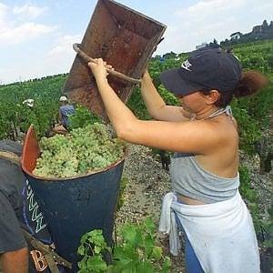 """Agricoltura familiare, """"Difendi chi lavora la terra"""" in Italia e nel mondo"""