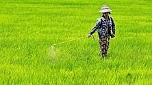 """Agricoltura familiare  """"Difendi chi  lavora la terra""""  in Italia e nel mondo"""