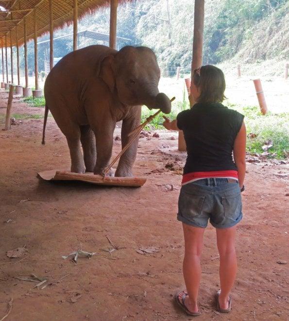 Un corpo da elefante: così il pachiderma mostra di rendersene conto