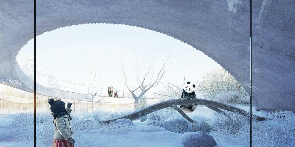 La nuova casa dei panda di Copenhagen, tra architettura e natura