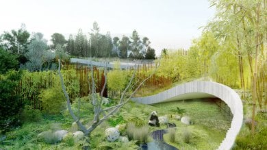 Copenaghen, una nuova casa 'yin e yang' per i panda giganti della regina   foto