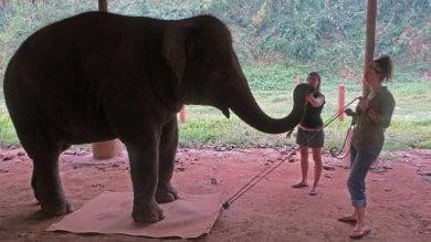 Gli elefanti hanno consapevolezza  del proprio corpo   video   -   foto