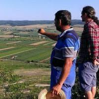 Romania, terreni agricoli e affarismo sregolato: il business delle campagne