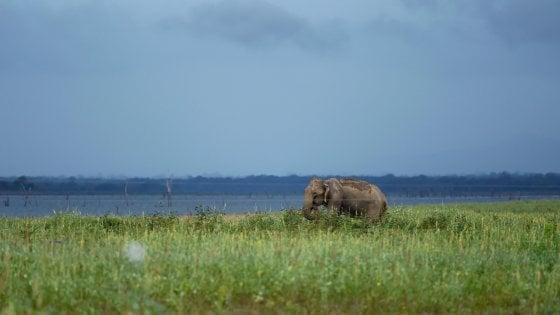 Fauna e flora selvatica a rischio in 30% siti protetti