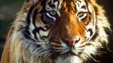 Fauna e flora selvatica a rischio nel 30% siti naturali protetti   foto
