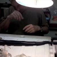 Trova il raro verme gigante delle paludi delle Filippine