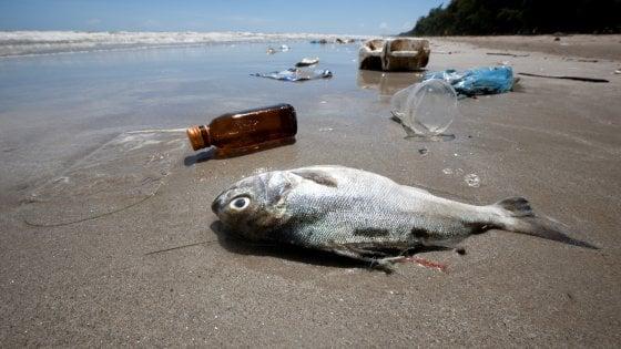 Un fiume di plastica su foche e orsi polari: così soffochiamo l'Artico