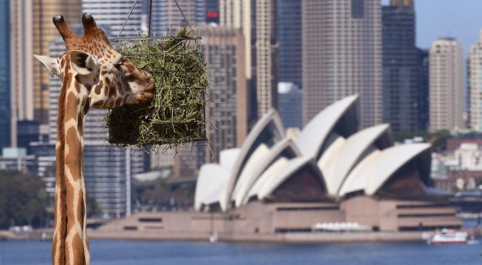 Sydney gourmet: dieci  indirizzi per scoprire i sapori  della cucina australiana