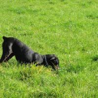 Cane e lupo: cosa hanno in comune