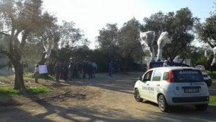 Gasdotto, in Salento stop al trasferimento degli ulivi: Tap e Comune firmano la tregua
