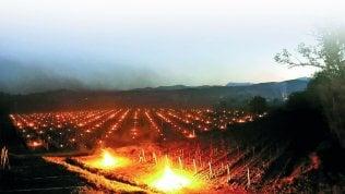 Roghi di notte tra i filari: un rituale antico salva i vitigni dal gelo