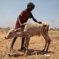 Carestia, Sud Sudan, Corno d'Africa e Lago Chad: è la fame per 30 milioni