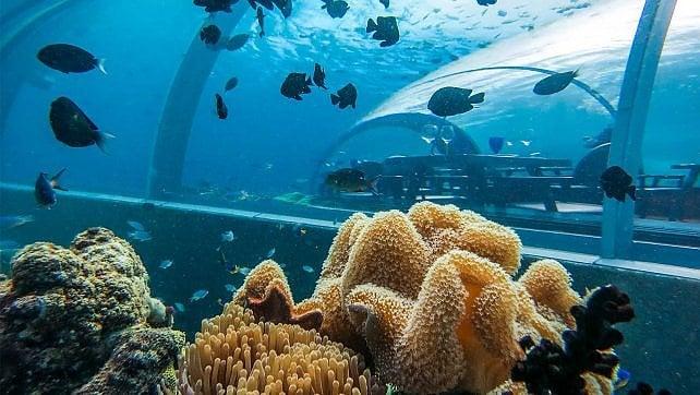 Maldive, apre un ristorante sui fondali -   foto